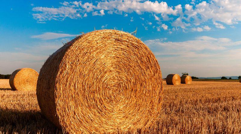 straw bales 726976 1920 800x445 - Virtuelle Rundgänge in der Landwirtschaft