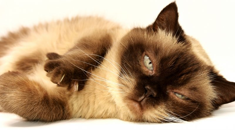 cat 3113513 1920 800x445 - Lagerfelds Katze erbt einige Millionen Dollar