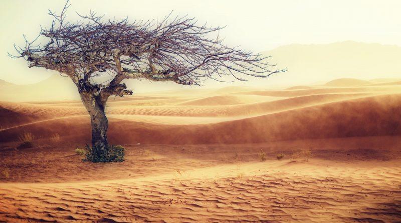 desert 2227962 1280 800x445 - Alle reden vom Klimawandel und keiner tut etwas