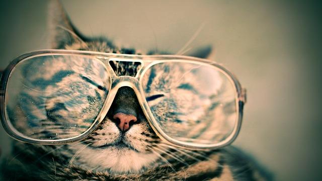 cat 984097 640 - Augen auf beim Brillenkauf!