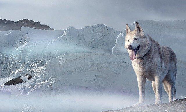 husky 2470443 640 - Uns steht ein harter Winter bevor